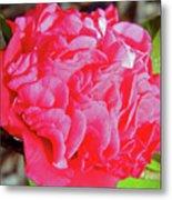 Red Camellia Metal Print