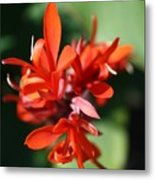 Red Canna Flower Metal Print