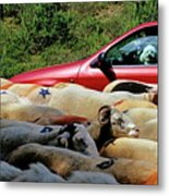 Red Car Blocked By A Flock Of Sheep Metal Print by Sami Sarkis