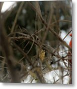 Red Cardinal II Metal Print