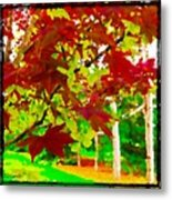 Red Chinese Maple Leaf's Metal Print