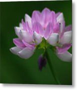 Red Clover Metal Print