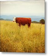 Red Cow On The Blue Ridge Metal Print