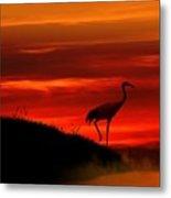 Red Crowned Crane At Dusk Metal Print