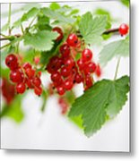 Red Currant Metal Print