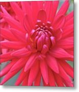 Red Dahlia Delight Metal Print