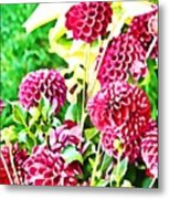 Red Dahlias Metal Print