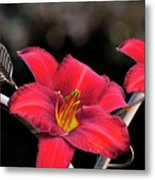 Red Day Lilies Metal Print