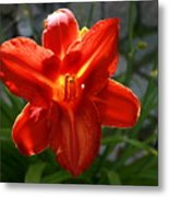 Red Daylily With Sunlight Metal Print