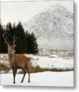 Red Deer Stag And The Buachaille Etive Mor In Winter Metal Print