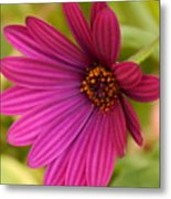 Red Delight Metal Print