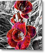 Red Double Lily Metal Print