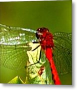 Red Dragon 2 Metal Print