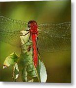 Red Dragon Fly Metal Print
