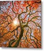 Red Dragon Japanese Maple In Autumn Colors Metal Print