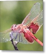 Red Dragonfly 5 Metal Print