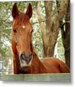 Red Ears Up Metal Print