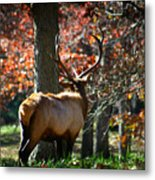Red Elk Metal Print