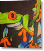 Red Eye Tree Frog Metal Print