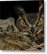 Red Eyed Mama And Baby Horned Owls Metal Print