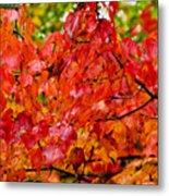 Red Fall Leaves Metal Print