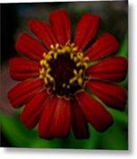 Red Flower 8 Metal Print