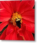 Red Flower And Bee Metal Print