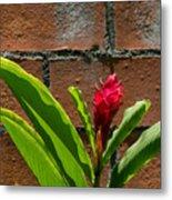 Red Flower Iv Metal Print