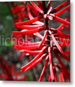 Red Flower Under The Light Of The Setting Sun Metal Print