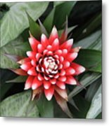 Red Flower With White Tips Metal Print