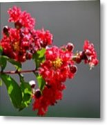 Red Flowers After The Rain Metal Print