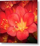 Multiple Red Flowers In Bloom Metal Print