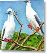 Red Footed Booby #255, Metal Print