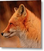 Red Fox 2 Metal Print