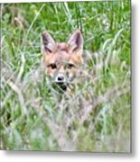 Red Fox Baby Hiding Metal Print