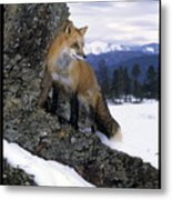 Red Fox In The Mountains Metal Print