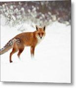 Red Fox In Winter Wonderland Metal Print