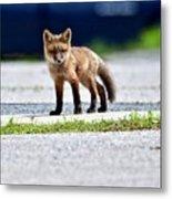 Red Fox Kit On Road Metal Print