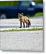 Red Fox Kit Standing On Old Road Metal Print