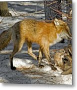 Red Fox Mommy And The Cutest Puppy Metal Print