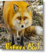 Red Fox Nature Girl Metal Print