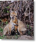 Red Fox Pictures 65 Metal Print