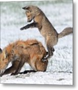 Red Fox Pounce Metal Print