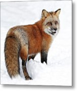 Red Fox Winter Metal Print