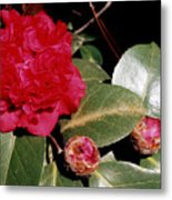 Red Frilly Camillia Metal Print