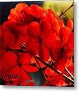 Red Geranium Metal Print