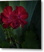 Red Geranium Metal Print