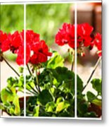 Red Geraniums Triptych Metal Print