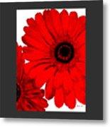 Red Gerber Border     Digital Art  Metal Print