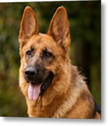 Red German Shepherd Dog Metal Print